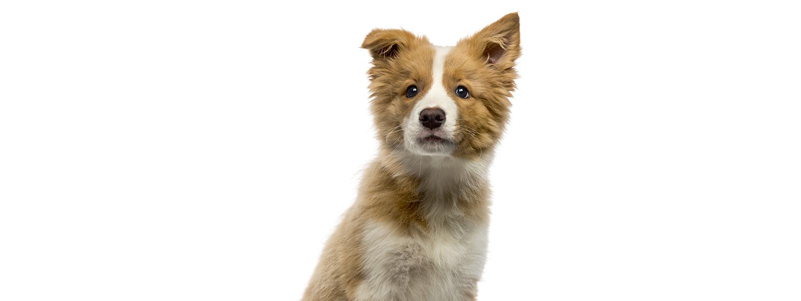 Header hond Bont voor Dieren