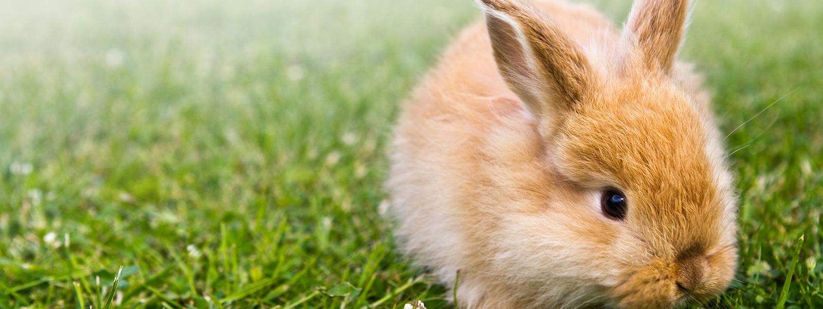 Header konijn Bont voor Dieren