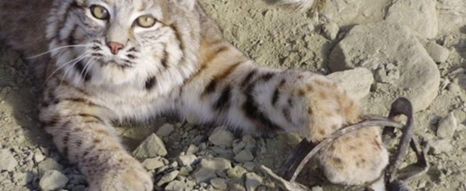 Header Lynx Bont voor Dieren