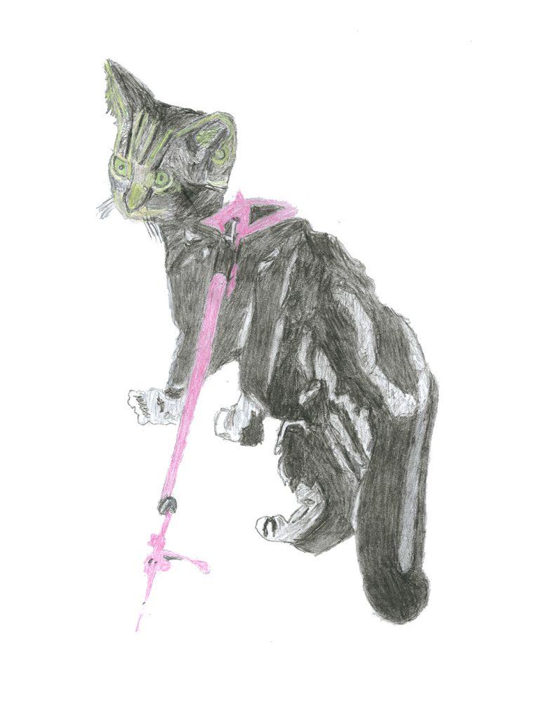 Tekening kat Bont voor Dieren