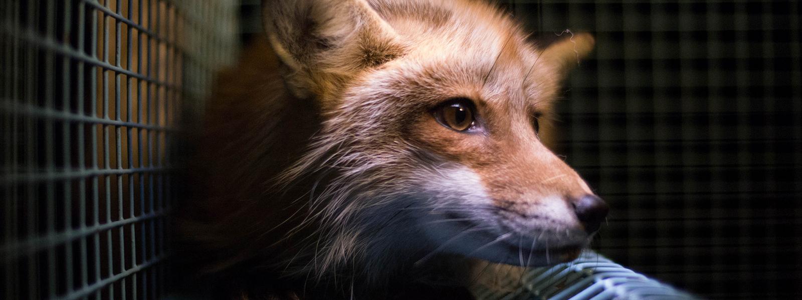 Header vos Bont voor Dieren