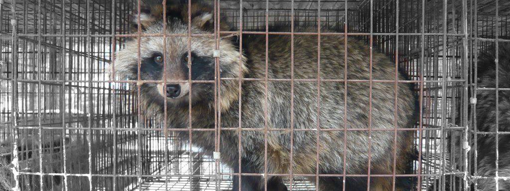 Header wasbeerhond Bont voor Dieren