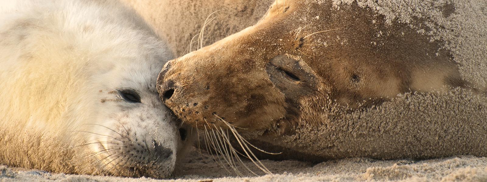 Header zeehond Bont voor Dieren